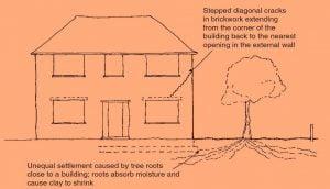 تأثير جذور الأشجار على البناء