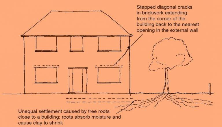 تأثير جذور الأشجار على البناء وكيفية تجنب المشاكل المتعلقة بها